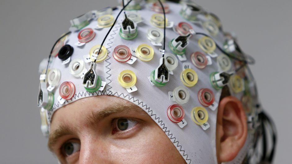 brain-organization